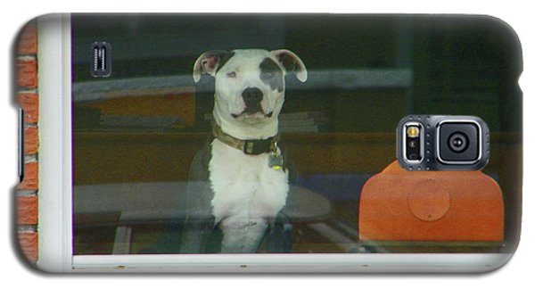 Galaxy S5 Case featuring the photograph Doggie In The Window by Lenore Senior