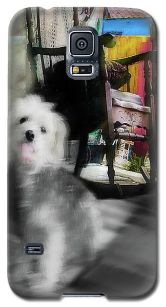 Dogie In The Patio Art  Galaxy S5 Case