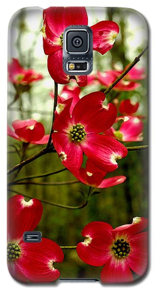 Dogwood Blooms In The Spring Galaxy S5 Case