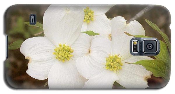 Dogwood Blossom Trio Galaxy S5 Case