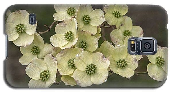 Dogwood Dance In White Galaxy S5 Case