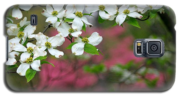 Dogwood Days Galaxy S5 Case by Living Color Photography Lorraine Lynch
