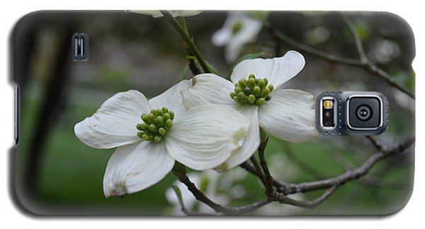 Galaxy S5 Case featuring the photograph Dogwood by Linda Geiger