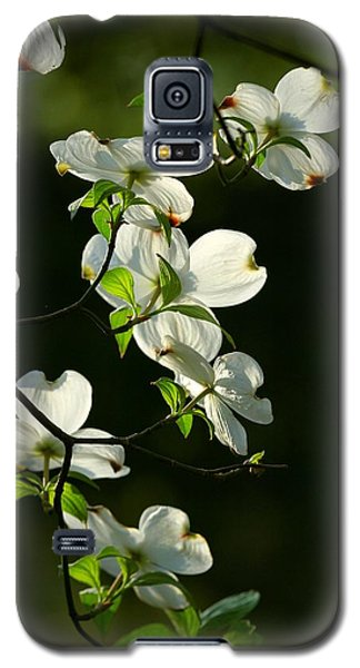 Dogwood Retrospective Galaxy S5 Case