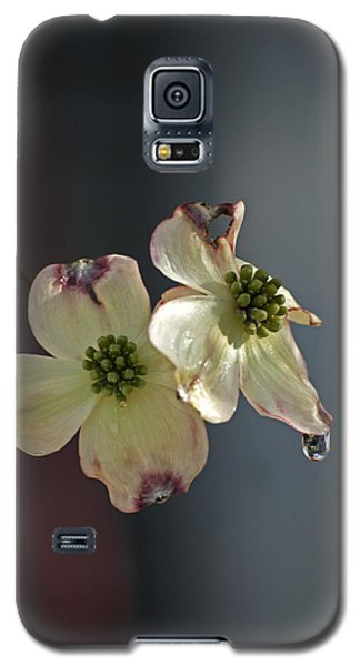 Galaxy S5 Case featuring the photograph Dogwood Tear by Elsa Marie Santoro