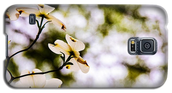 Galaxy S5 Case featuring the photograph Dogwoods Under The Pines by John Harding