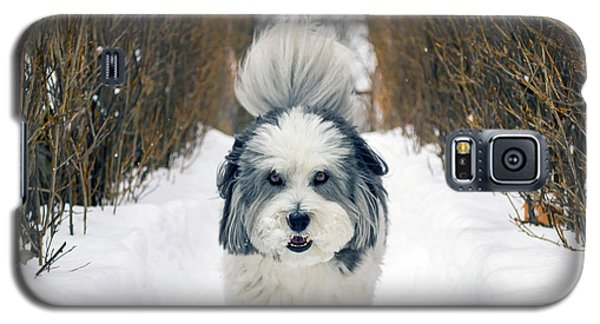Galaxy S5 Case featuring the photograph Doing The Dog Walk by Keith Armstrong