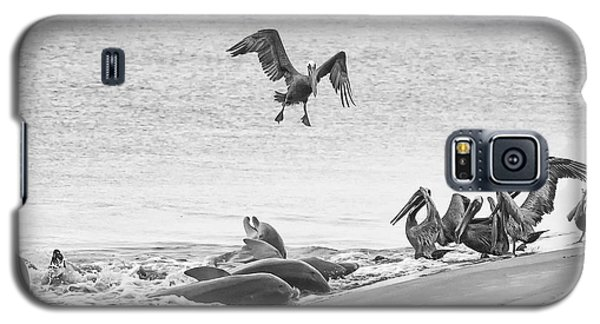 Dolphin And Pelican Party Galaxy S5 Case