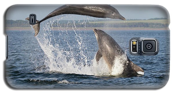 Dolphins Having Fun Galaxy S5 Case