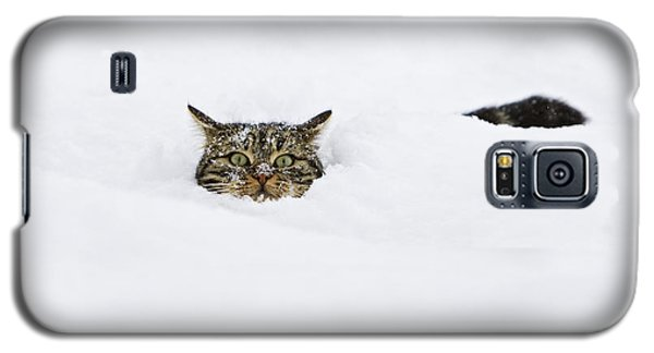 Domestic Cat Felis Catus In Deep Snow Galaxy S5 Case