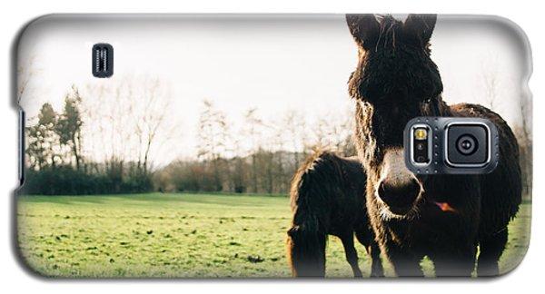 Donkey And Pony Galaxy S5 Case