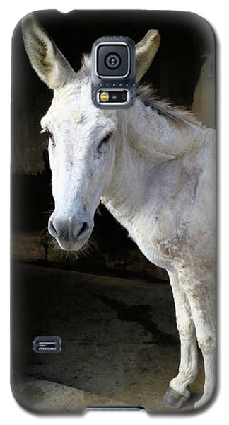Galaxy S5 Case featuring the photograph Donkey Hellow by Scott Kingery