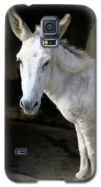Donkey Hellow Galaxy S5 Case by Scott Kingery