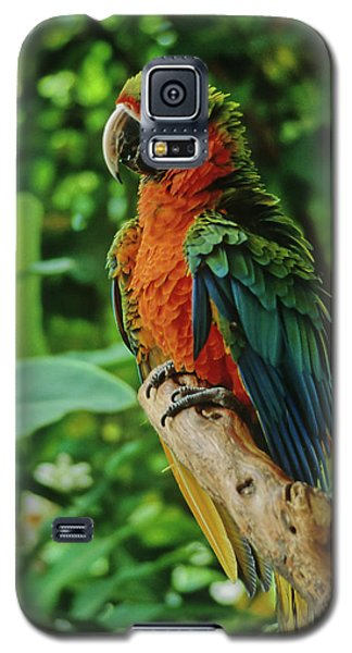 Galaxy S5 Case featuring the photograph Don't Ruffle My Feathers by Marie Hicks