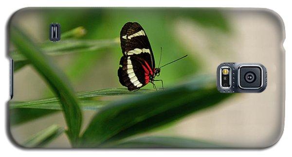 Doris Longwing Butterfly Galaxy S5 Case