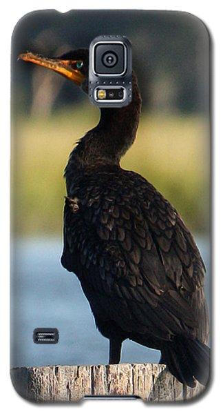 Double-crested Cormorant 1 Galaxy S5 Case
