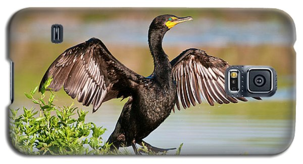 Double-crested Cormorant Galaxy S5 Case by Gary Lengyel