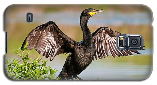 Double-crested Cormorant Galaxy S5 Case