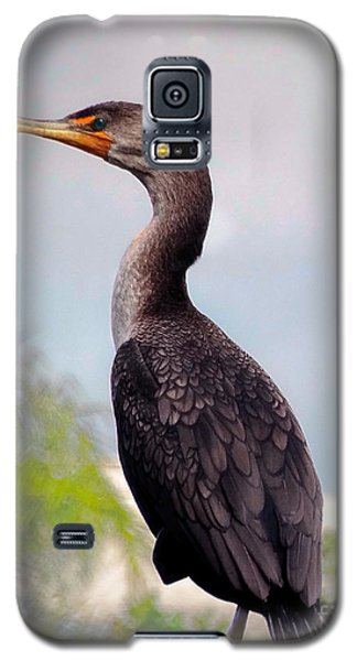 Double Crested Cormorant Galaxy S5 Case
