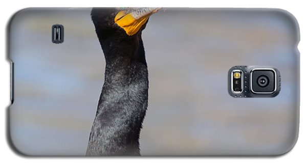 Double-crested Cormorant Galaxy S5 Case by Tam Ryan