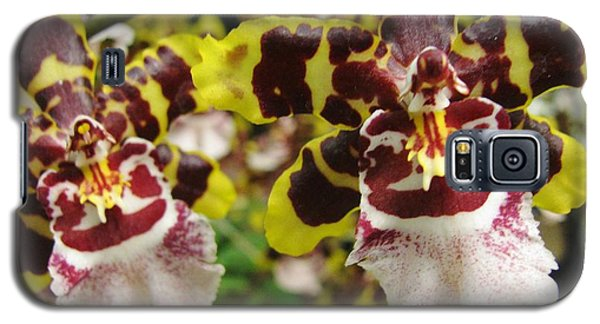 Double Odontoglossum Orchid Galaxy S5 Case