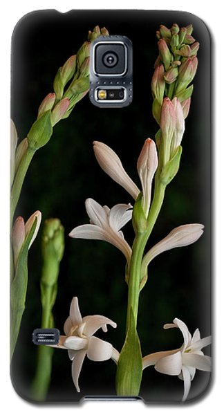 Double Tuberose In Bloom #2 Galaxy S5 Case