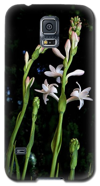 Double Tuberose In Bloom Galaxy S5 Case