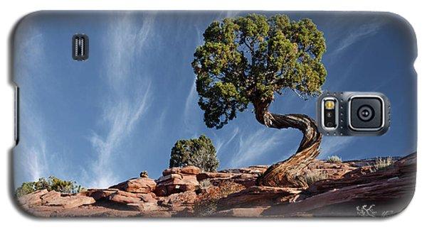Double Twist Juniper Galaxy S5 Case