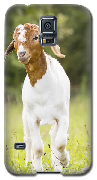 Dougie The Goat Galaxy S5 Case