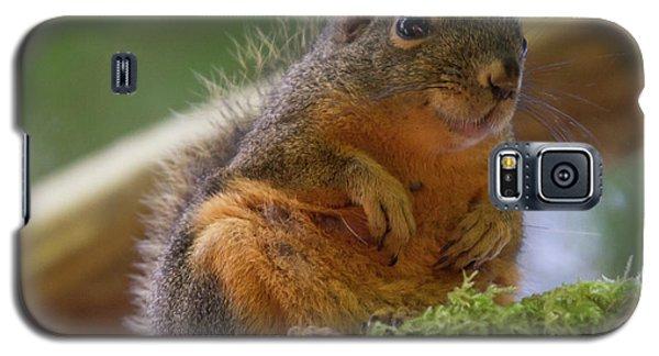 Douglas Squirrel Galaxy S5 Case