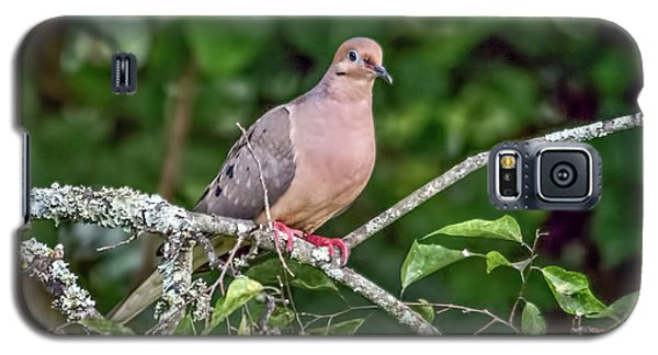 Dove On A Branch Galaxy S5 Case