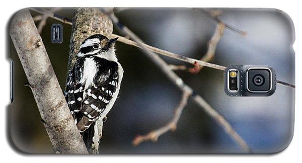 Downy Woodpecker Galaxy S5 Case by Dan Traun