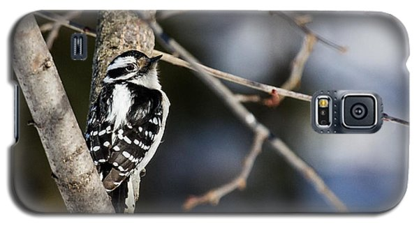 Galaxy S5 Case featuring the photograph Downy Woodpecker by Dan Traun