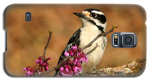 Downy Woodpecker In Spring Galaxy S5 Case