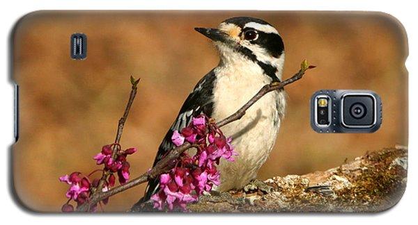 Downy Woodpecker In Spring Galaxy S5 Case