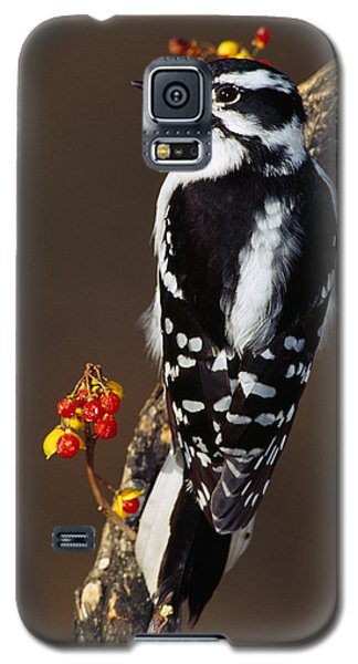 Downy Woodpecker On Tree Branch Galaxy S5 Case by Panoramic Images