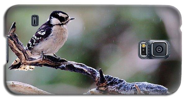 Downy Woodpecker With Snow Galaxy S5 Case