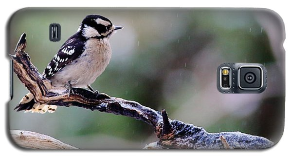 Downy Woodpecker With Snow Galaxy S5 Case