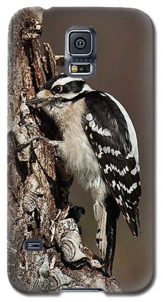 Galaxy S5 Case featuring the photograph Downy Woodpecker's Secret Stash by Lara Ellis