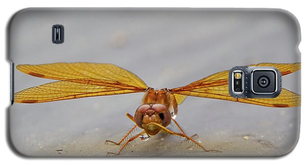 Dragon Fly Hanging Around Galaxy S5 Case