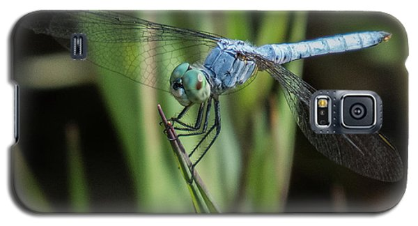 Dragonfly 13 Galaxy S5 Case