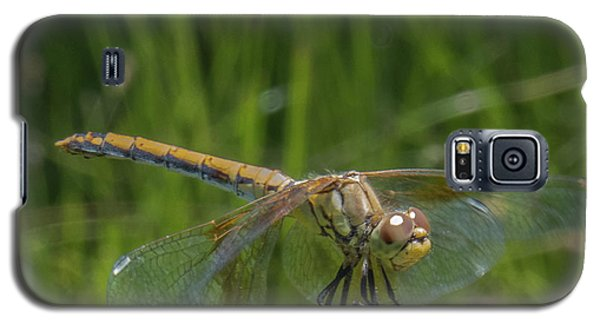 Dragonfly 7 Galaxy S5 Case