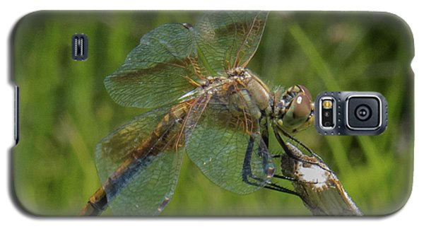 Dragonfly 8 Galaxy S5 Case
