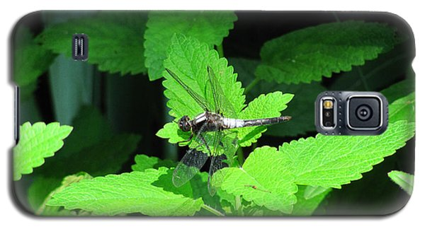 Dragonfly At Rest Galaxy S5 Case