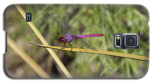 Galaxy S5 Case featuring the photograph Dragonfly by David Rizzo
