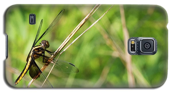 Dragonfly Galaxy S5 Case