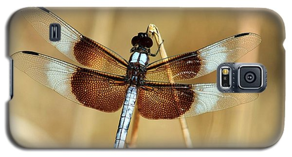 Dragonfly On Reed Galaxy S5 Case by Sheila Brown