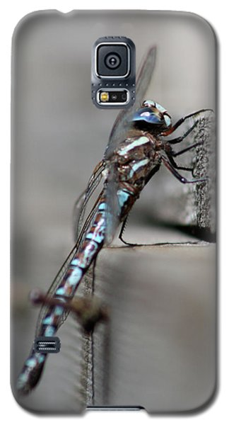 Galaxy S5 Case featuring the photograph Dragonfly Pause by Cathie Douglas