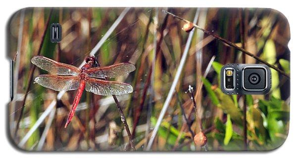 Dragonfly Galaxy S5 Case