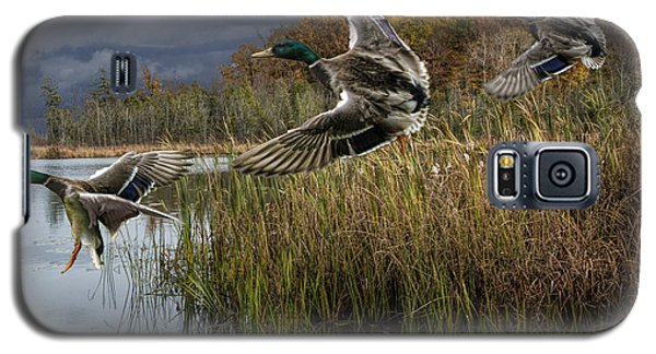 Drake Mallard Ducks Coming In For A Landing Galaxy S5 Case